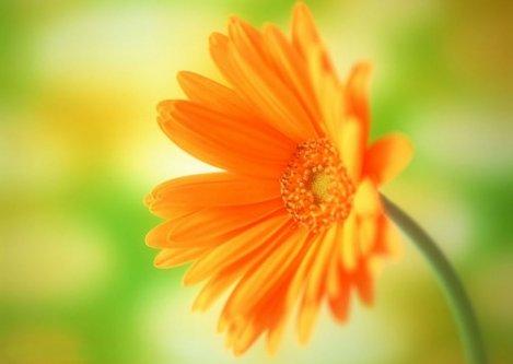 善良,是盛放在心田的花朵