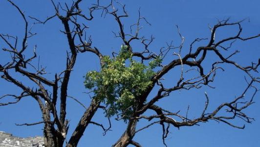 同为树,不同命同为树,不同命